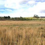 Envivo_25_Don_McKinnon_Drive_Albany_Rose_Garden_Development