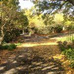Envivo_Structural_Civil_Engineering_Park_Auckland_Botanic_Gardens