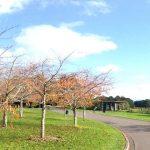 Envivo_Structural_Engineering_Park_Auckland_Botanic_Gardens_sculpture