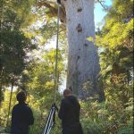 3D laser scanning kauri forest